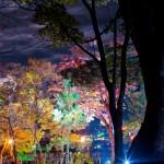 もみじ園ライトアップ6