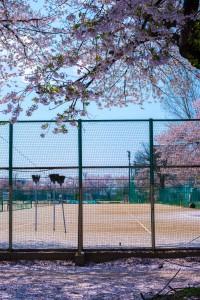長岡工業高校の桜